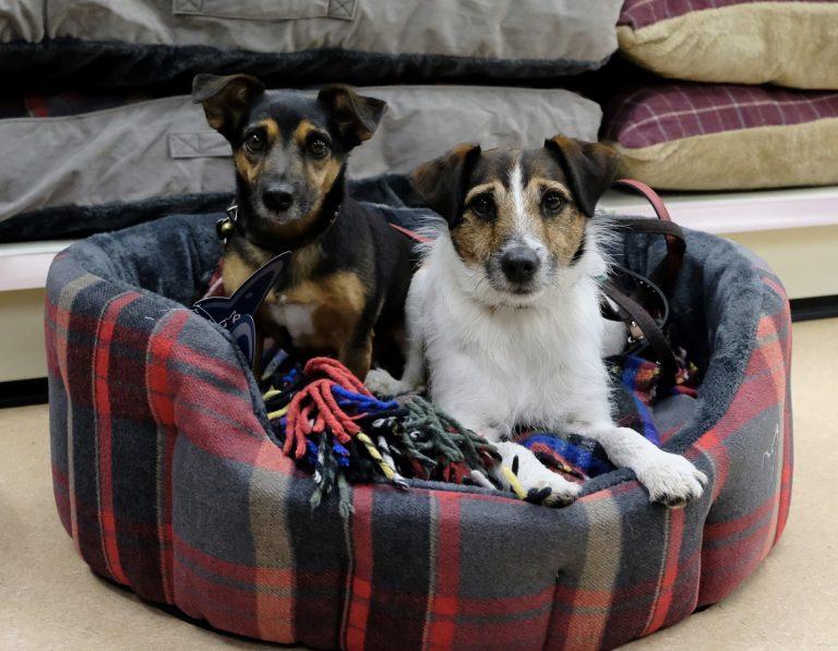 Pet retailer secures new Nottingham store