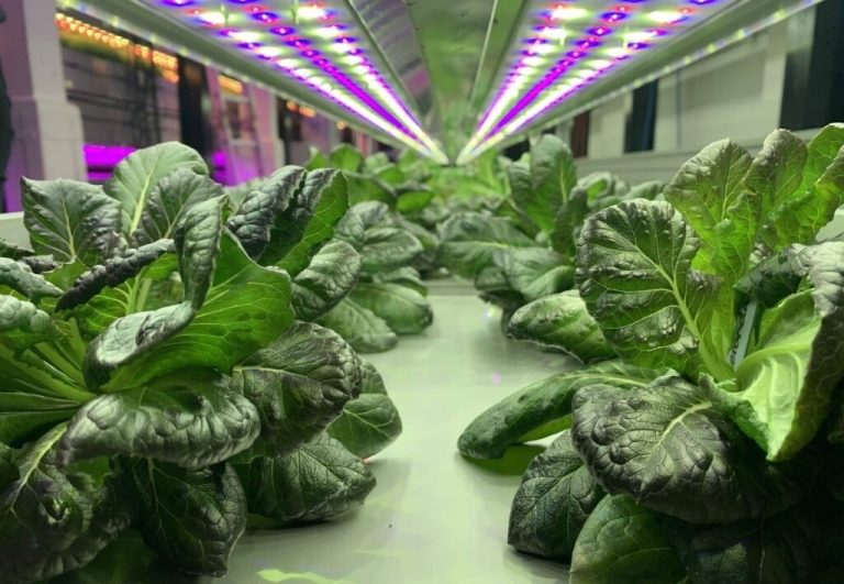 Partnership to launch Northamptonshire's first vertical farm